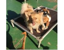 hotel para cachorro diária preço na Vila Sônia
