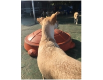 hotel para cachorro diária no Pacaembu