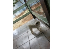 hotel para cachorro em sp preço Jardim Fortaleza