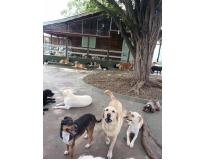hotel para cachorro em sp Monte Carmelo