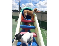 hotel para cachorro no brooklin preço Jardim Fortaleza