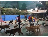 hotel para cachorro preço em Sapopemba