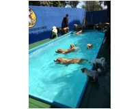 hotel para cachorro no Jardim Iguatemi