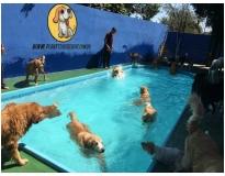 hotéis para cachorro