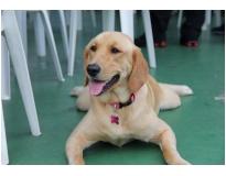 serviços de hotel para cachorro