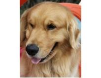 hotel para cães em são paulo preço na Ponte Rasa