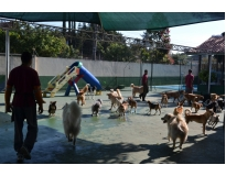 hotel pra cachorro preço no Ibirapuera