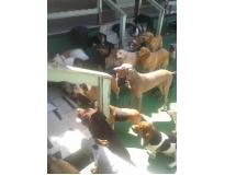 hotel spa para cães preço em Sapopemba