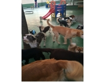 hotel spa para cães Macedo