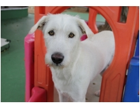 onde encontrar clube hotel para cães na Penha