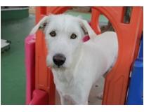 onde encontrar clube hotel para cães Jardim Fortaleza