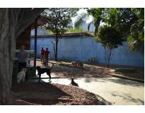 onde encontrar creche canina no Ibirapuera
