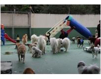 onde encontrar creche de pets no Jardim São Paulo