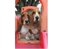 onde encontrar creche para cachorro em são paulo no Jardim São Luiz