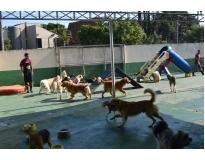 onde encontrar creche para cães no Morumbi