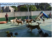 onde encontrar creche para cães no Alto da Lapa