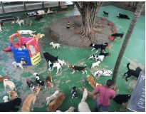 onde encontrar day care canino no Imirim
