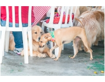onde encontrar day care em animais no Tucuruvi