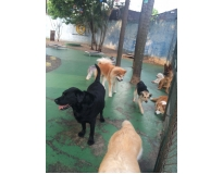 onde encontrar daycare para cachorro no Tremembé
