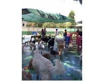 onde encontrar espaço com day care em Santo Amaro
