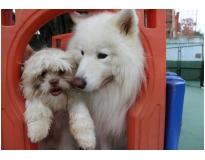 onde encontrar espaço para cães na Vila Curuçá