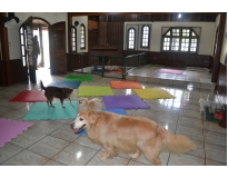 onde encontrar hospedagem de cachorro em Santo Amaro