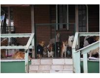 onde encontrar hospedagem de cães Jardim Aracília