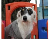 onde encontrar hotéis de cães Jardim Aracília