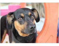 onde encontrar hotel creche para cães no Jardim São Luiz