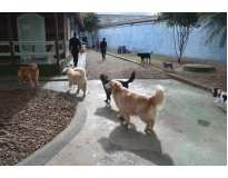 onde encontrar hotel fazenda para cachorro Jardim Aracília