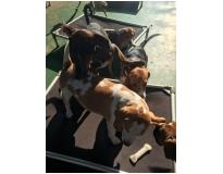 onde encontrar hotel para cachorro diária no Rio Pequeno