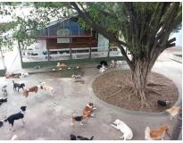 onde encontrar hotel para cachorro em sp na Anália Franco