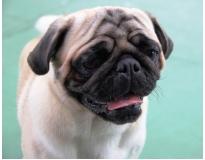 onde encontrar serviços de creche para cachorro na Consolação