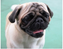 onde encontrar serviços de creche para cachorro na Vila Prudente
