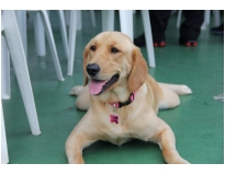 onde encontrar serviços de hotel para cachorro CECAP