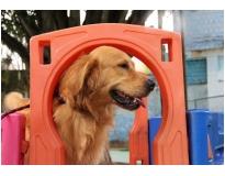 onde encontrar serviços de hotel para cães no Parque do Carmo