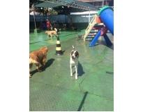 onde encontrar serviços de spa canino no Jardim América
