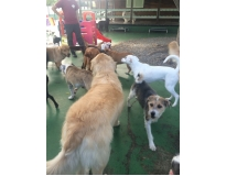 onde encontrar spa com day care canino no Centro