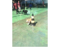 onde encontrar spa para animais em São Miguel Paulista
