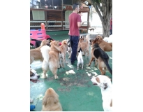 pet spa no Parque do Carmo