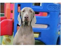 quanto custa clube hotel para cães em Higienópolis