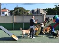 quanto custa creche canina na Mooca