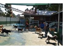 quanto custa creche de cachorro no Jardim América