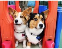 quanto custa creche para cachorro em são paulo no Ibirapuera