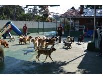 quanto custa creche para cães Monte Carmelo