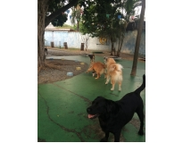 quanto custa day care para cachorro no Centro
