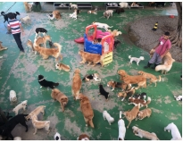 quanto custa daycare canino na Barra Funda
