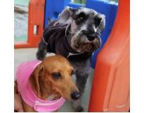 quanto custa espaço para cães em Sapopemba