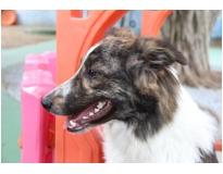 quanto custa hospedagem de cães em Pirituba