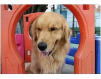 quanto custa hotéis de cães no Alto de Pinheiros